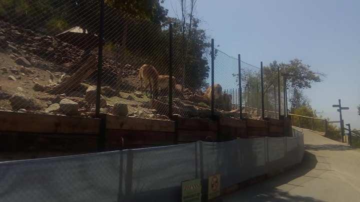 Visita al Zoológico Metropolitano – Santiago deChile