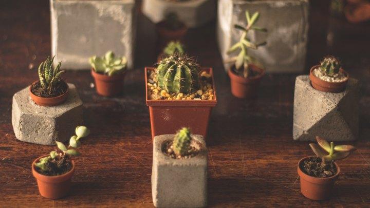 El poder de las suculentas ycactus